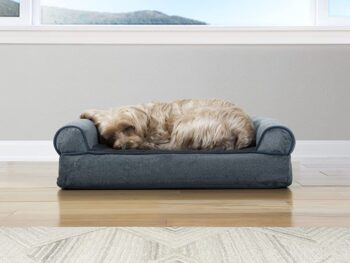Best Couch For Cats