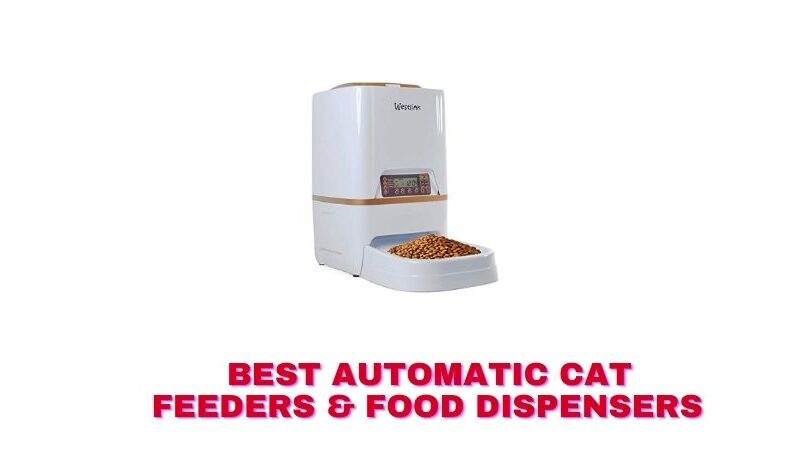 Best Automatic Cat Feeders & Food Dispensers